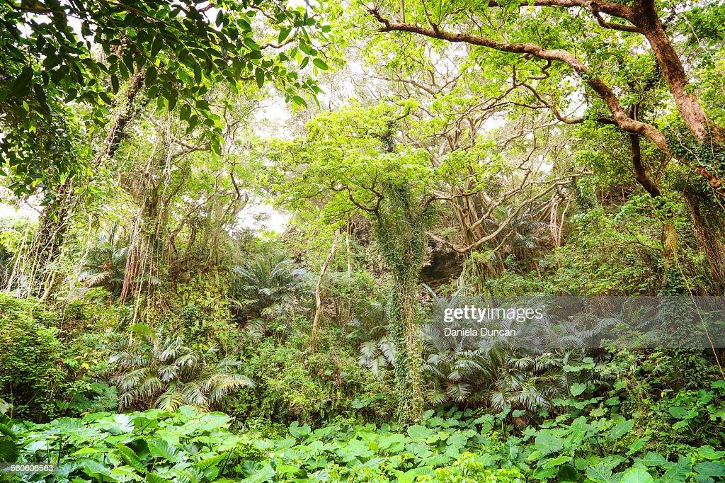 Lush vegetations