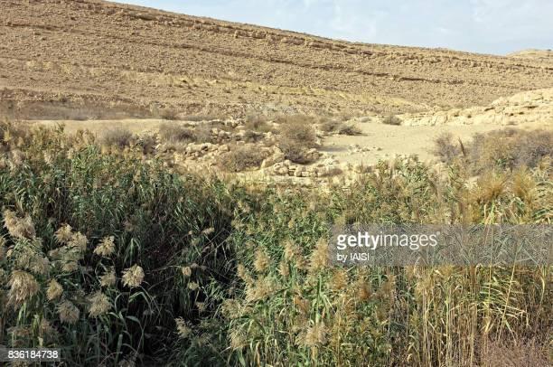 Lutz's cisterns in the Negev desert