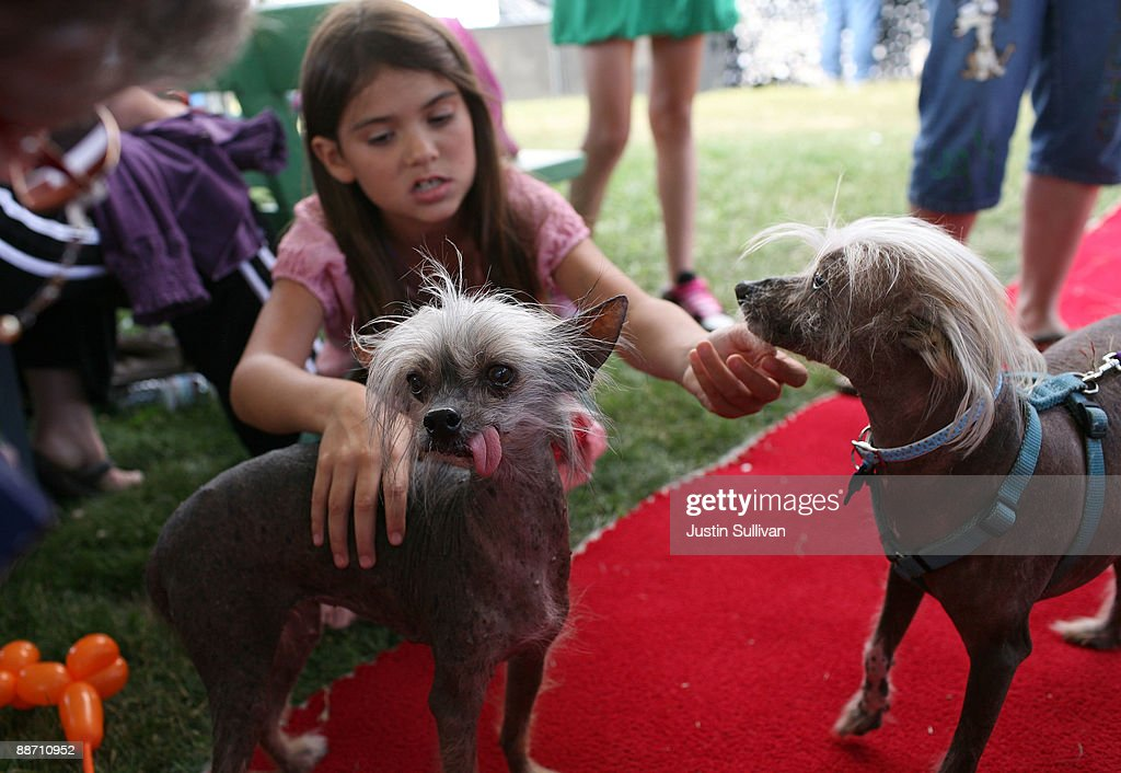 Lydon Oliver plays with two Chines Crested dogs before the start of the 21st Annual World's Ugliest Dog Contest at the Sonoma-Marin Fair June 26, 2009 in Petaluma, California. Pabst, a four year-old boxer mix won the annual World's Ugliest Dog contest.
