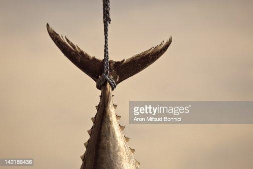 Lynching of bluefin tuna