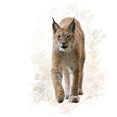digital painting of lynx portrait