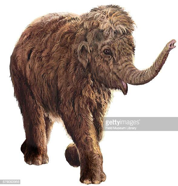 Lyuba female woolly mammoth calf Mammuthus primigenius Illustration an artist's rendering of what Lyuba might have looked like while alive Lyuba is...