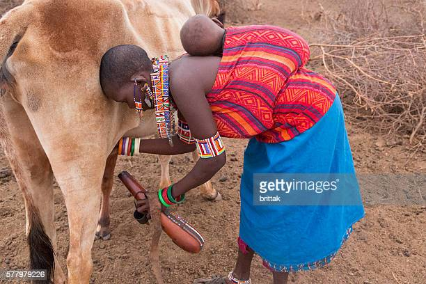 Maasai woman with baby on back milking cow into kalebas.
