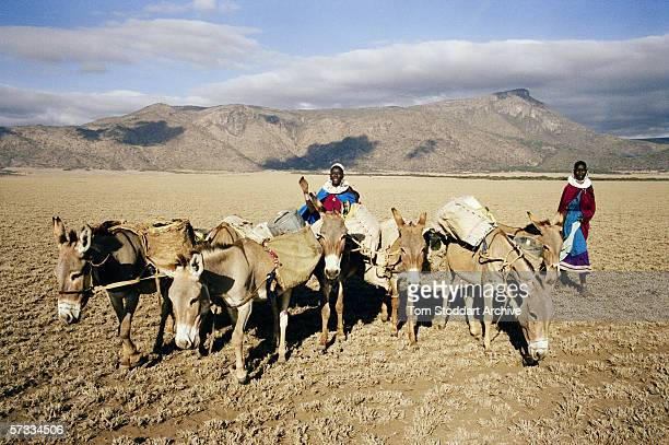 Maasai women Kiyanjoo Koima and Noongera Olebakuli drive their donkeys to find water in the Malambo district of Ngorongoro The region of Ngorongoro...