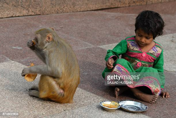 TOPSHOT A macaque monkey eats food after stealing it from an Indian child outside a temple in New Delhi on November 16 2017 HUSSAIN