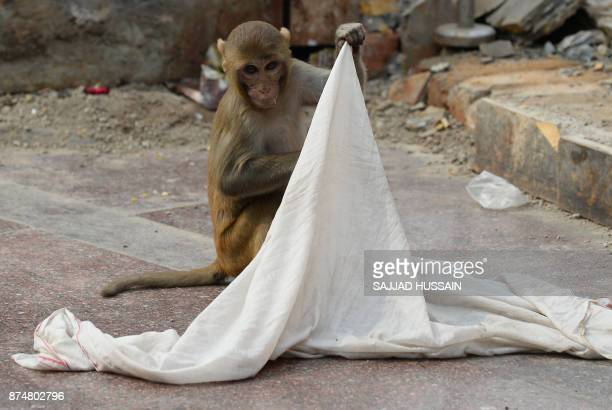 A macaque monkey lifts a cloth drying outside a temple in New Delhi on November 16 2017 HUSSAIN
