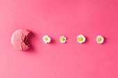 Macaroon with daisies on pink background. Flat lay