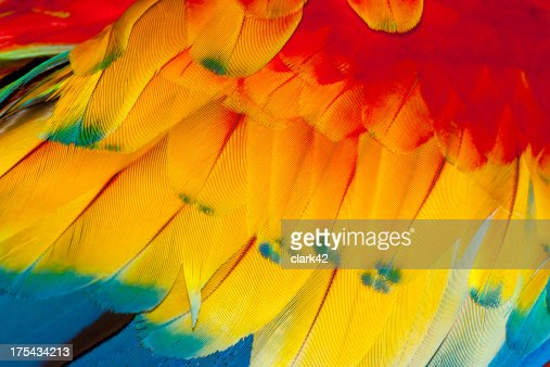 Macaw feathers, close-up