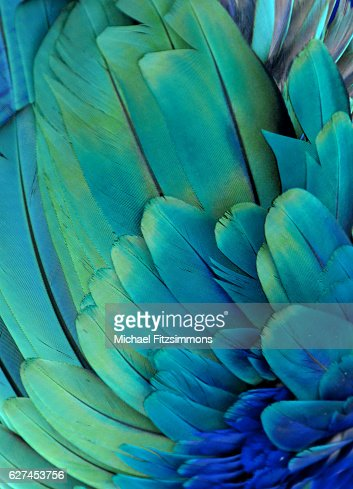 Macaw Feathers (Green/Blue) : Stock Photo