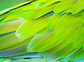 Colorful Macaw Plumage close up
