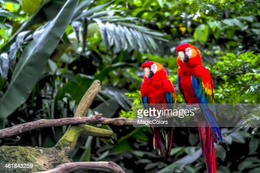 Macaw Parrot : Stock Photo
