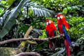 Macaw Parrot in Bird Park