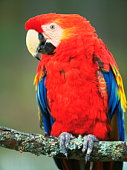Macaw parrot sitting on a branch