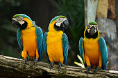 Macaw parrots, beautiful pets And the price is quite high