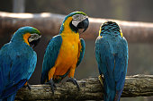 Macaw parrots, beautiful pets And the price is quite high.