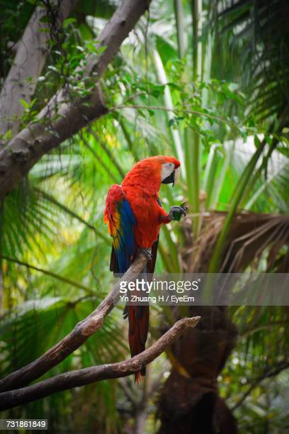 Macaw Perching On Tree Trunk