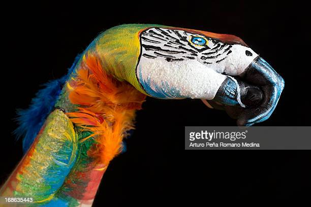 Parrot Illusion Body Painting
