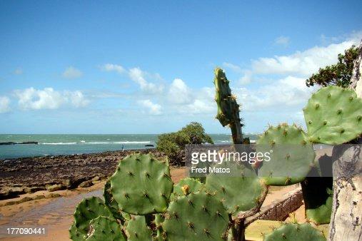 Maceió - Praia da Sereia