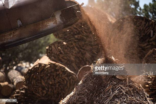 A machine cuts wood at the Spotted Owl Timber Inc mill in Santa Fe New Mexico US on Monday Aug 15 2016 Founded in 1991 the family owned and operated...