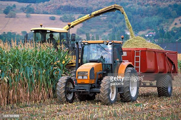 Machine harvesting corn on the field