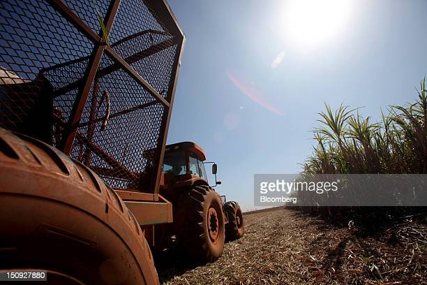 A machine harvests sugarcane at the Louis Dreyfus Commodities' Biosev Continental farm near the city of Colombia Brazil on Friday Aug 24 2012 The...