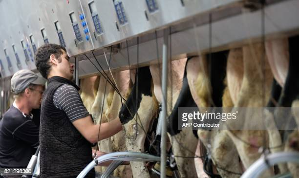 A machine milking operator works in a row of milking units at a dairy farm in a village of Vvedenskoye outside Moscow on July 23 2017 / AFP PHOTO /...