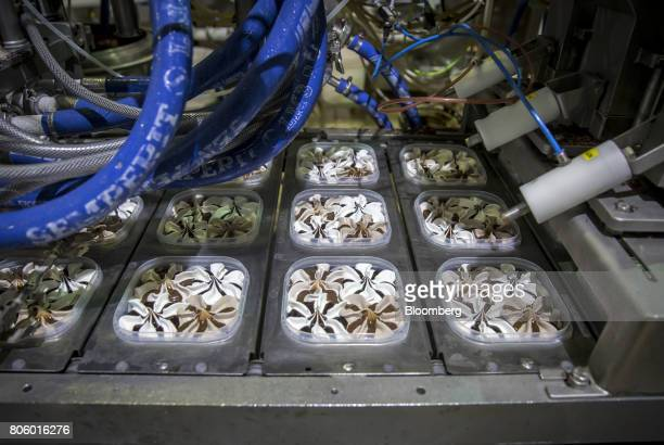 A machine produces tubs of Quattro ice cream on the production line at the Ledo dd ice cream plant operated by Agrokor dd in Zagreb Croatia on Monday...