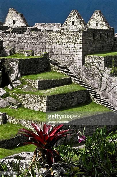 A bromeliad grows amongst the ancient Inca ruins at Machu Picchu.