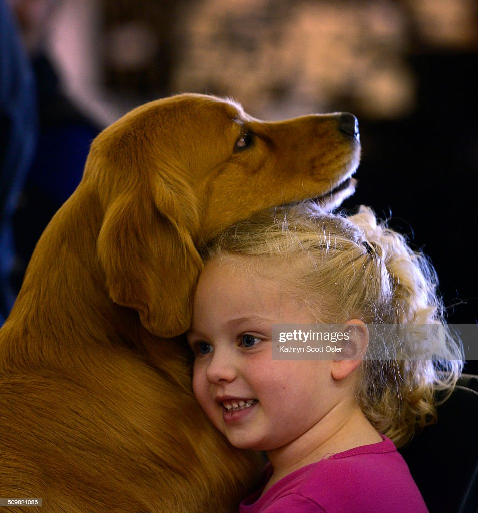 Mackenzie Rullo, 4, waits ringside with Golden Retriever 'Envy' as she and her mom Jen watch the judging of another group of Golden's. The Rocky Mountain Cluster All Breed Dog Show takes place at the National Western Complex in Denver on Friday, Feb. 12, 2016 and continues through Sunday, Feb 15th.
