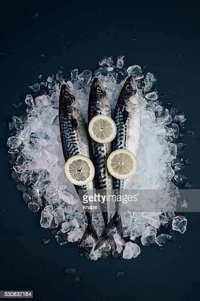 Caballa pescados y mariscos en el hielo de vida