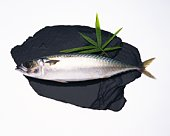 Mackerel on stone, side view, white background, cut out