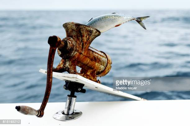A mackerel sits in a chum grinder on the stern of the Kalida during the North Atlantic Monster Shark Tournament on July 14 2017 in New Bedford...