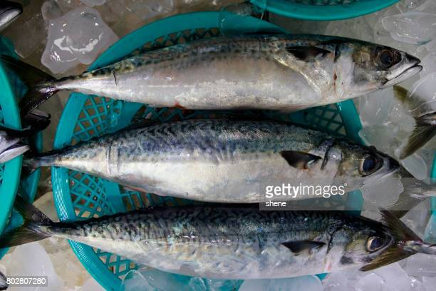 Mackerels in the Seafood Market