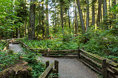 Wooden railings line the trails through Cathedral Grove in MacMillan Provincial Park, Vancouver Island, BC