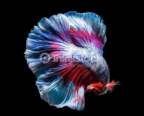 macro beautiful tail of fish : Stock Photo