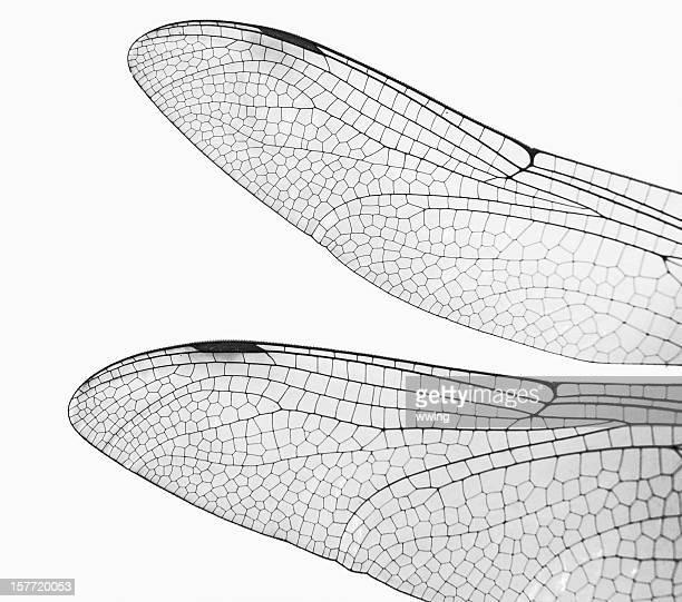 Macro Libellule ailes