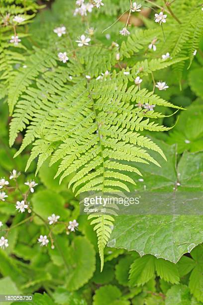 macro fern resting over dogwood