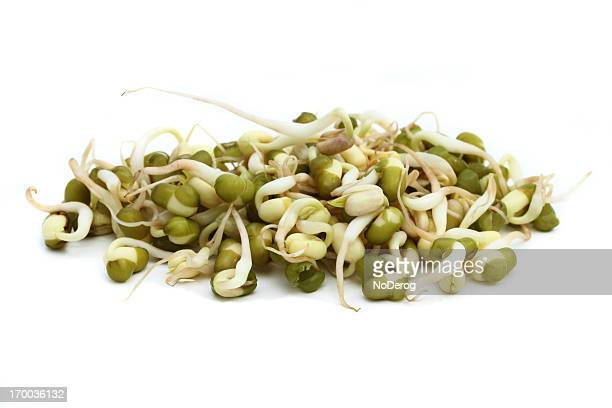 Macro image of mung bean sprouts