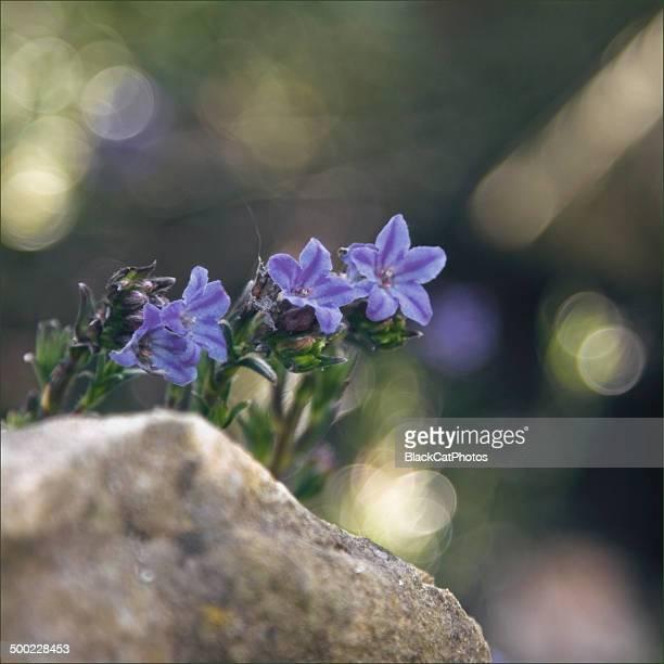 Macro Nature Photography
