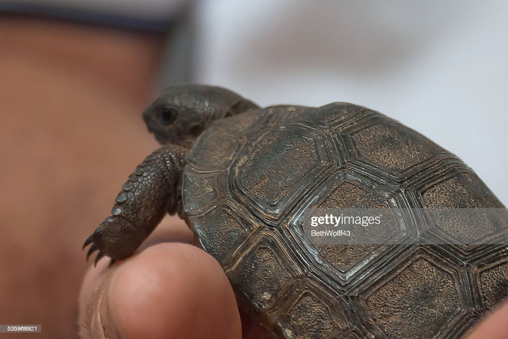 Macro of baby tortoises' shell : Stock Photo