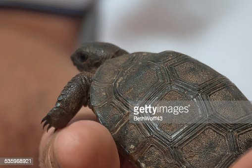 Macro of baby tortoises' shell : Stock Photo