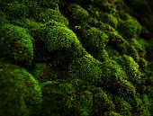 horizontal abstract shot of green moss texture, nature background.