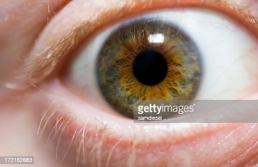 Macro of the human eye