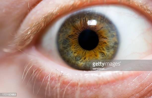 Makro des Menschliches Auge