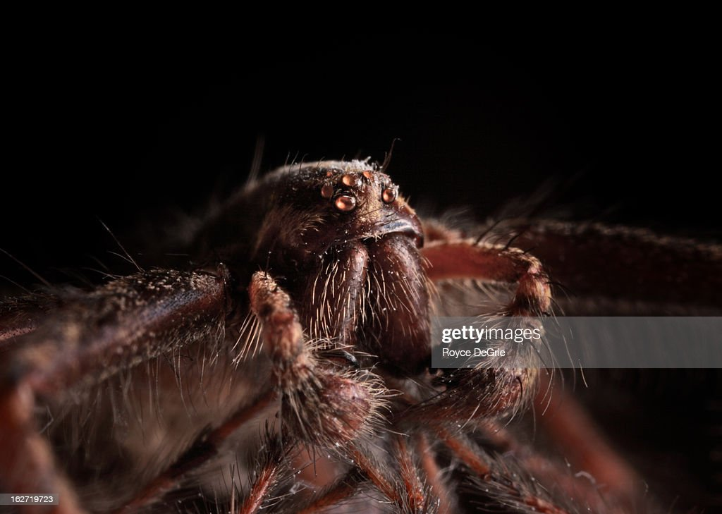 Macro photo of a spider : Stock Photo