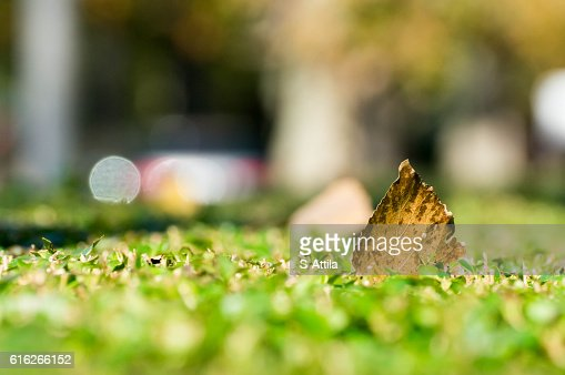Macro shot of a yellow leaf on the right side : Stock Photo