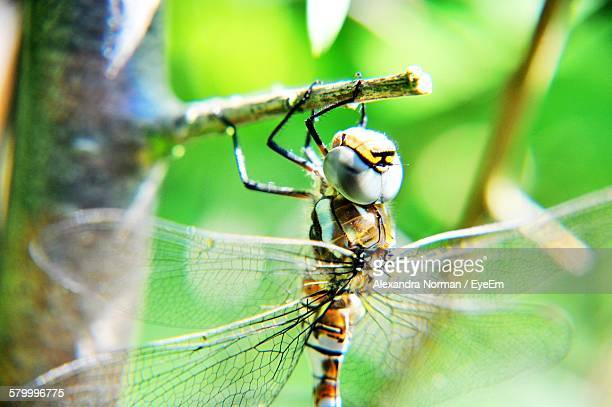 Macro Shot Of Dragonfly Perching On Twig
