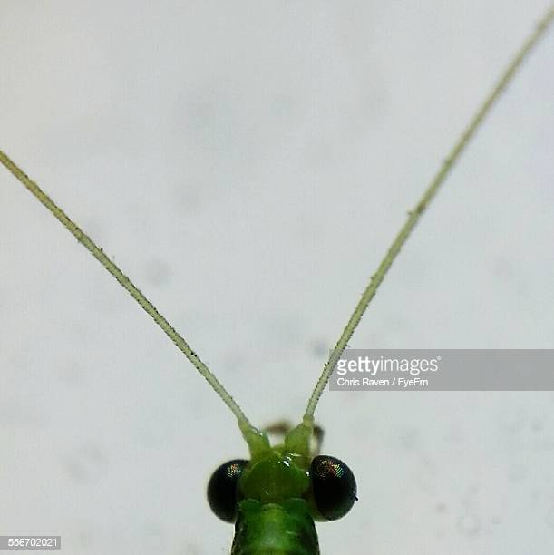 Macro Shot Of Green Insect