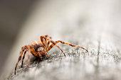 Macrophoto of an European garden spider