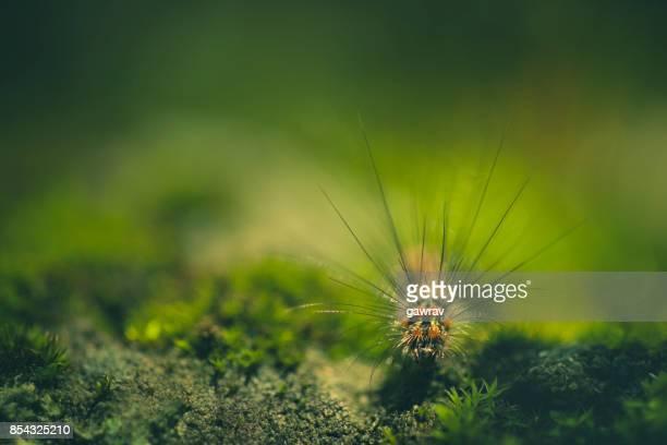 Macro-photography of caterpillar.